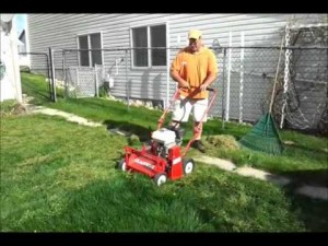 lawn-cleanup