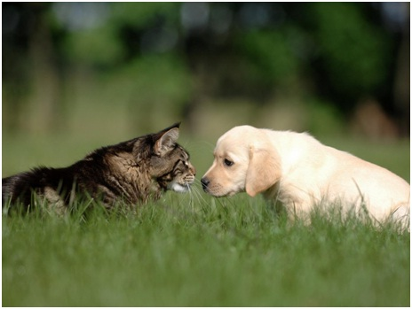 Effective Tips for Removing Pet Hair