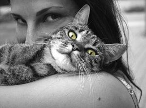 pet cat love