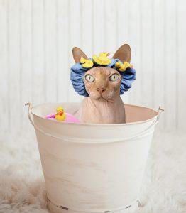 Cat in bath